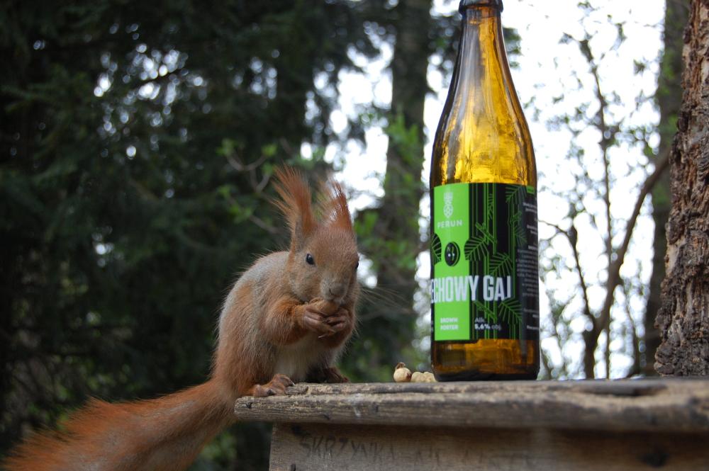 Perun Orzechowy Gaj i Wiewiórka (16)