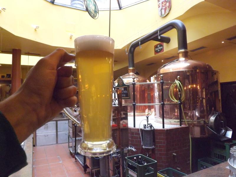 piwo wiedeń (6)