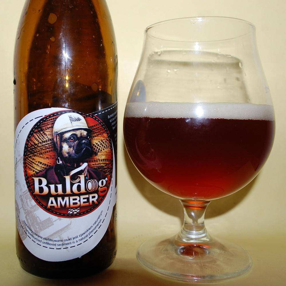 Buldog Amber Zloty Pies.JPG